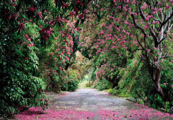 Fototapete Blütengang
