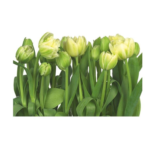 Fototapete Tulips