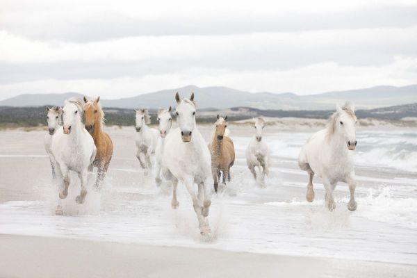 Fototapete Pferde in der Camargue