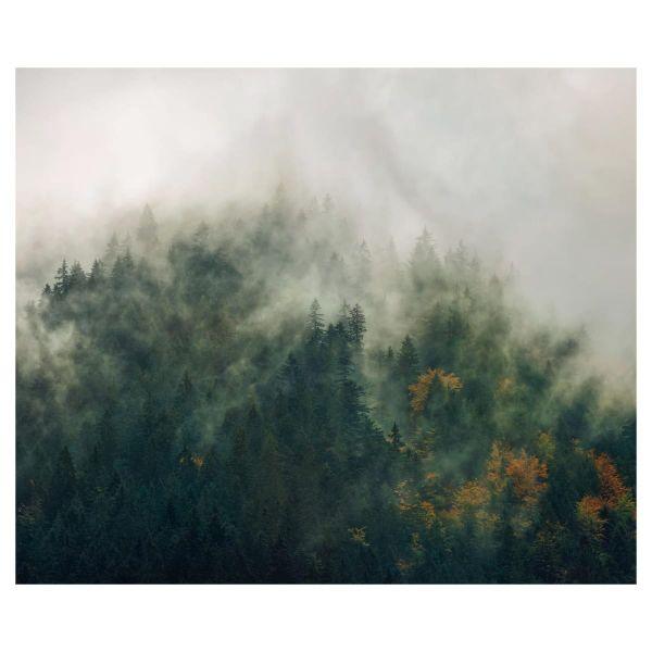 Digitaldruck Fototapete Zauberwald klein