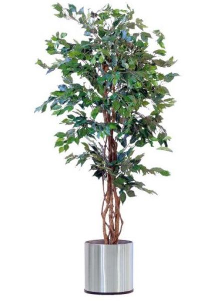 Kunstpflanze Ficus Benjamini mit Naturstamm H 170 cm Kunstblume