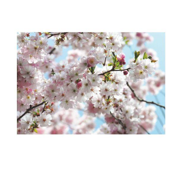 Vlies-Fototapete Spring
