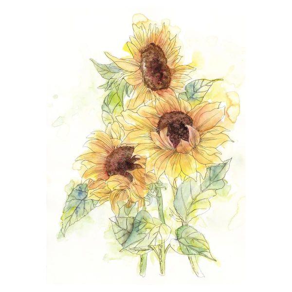 Vlies Fototapete Sonnenblumen